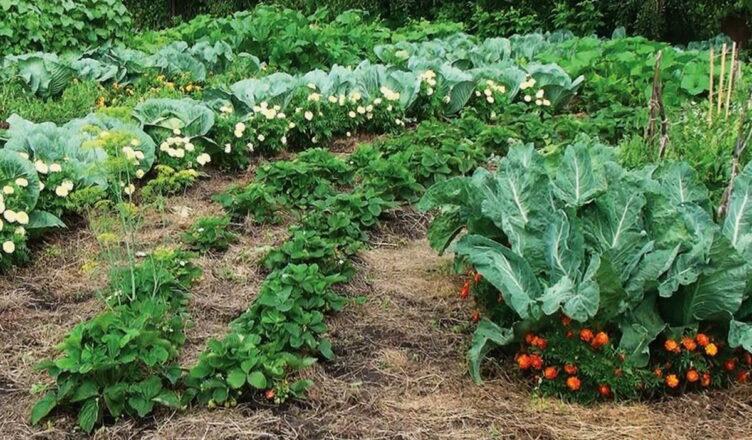 Какие растения нельзя выращивать на одной грядке