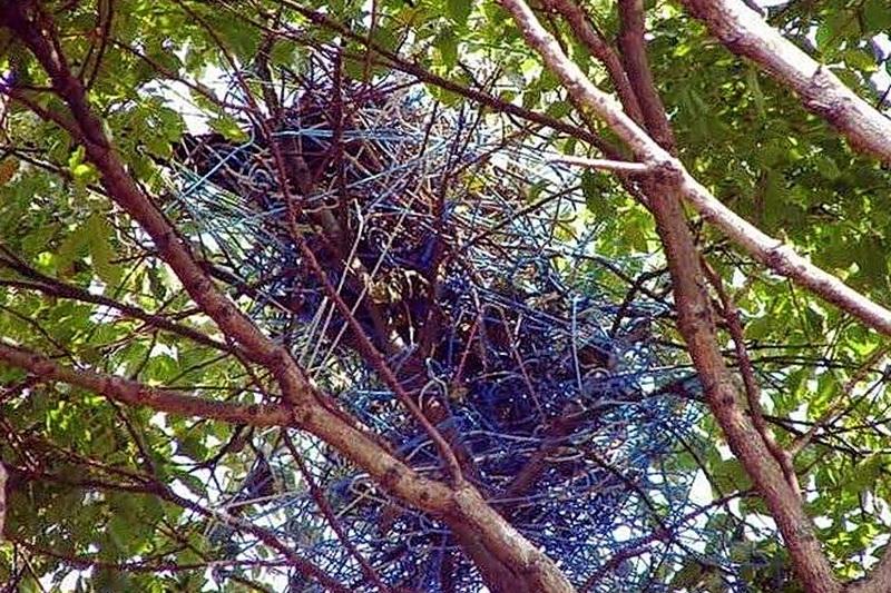 гнездо вороны из вешалок