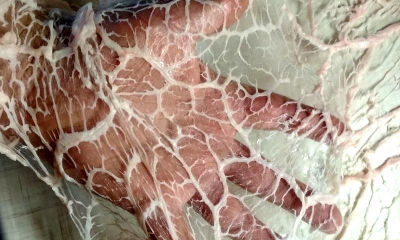 Жировая сетка сальник