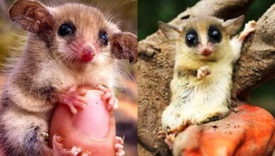5 самых маленьких млекопитающих в мире