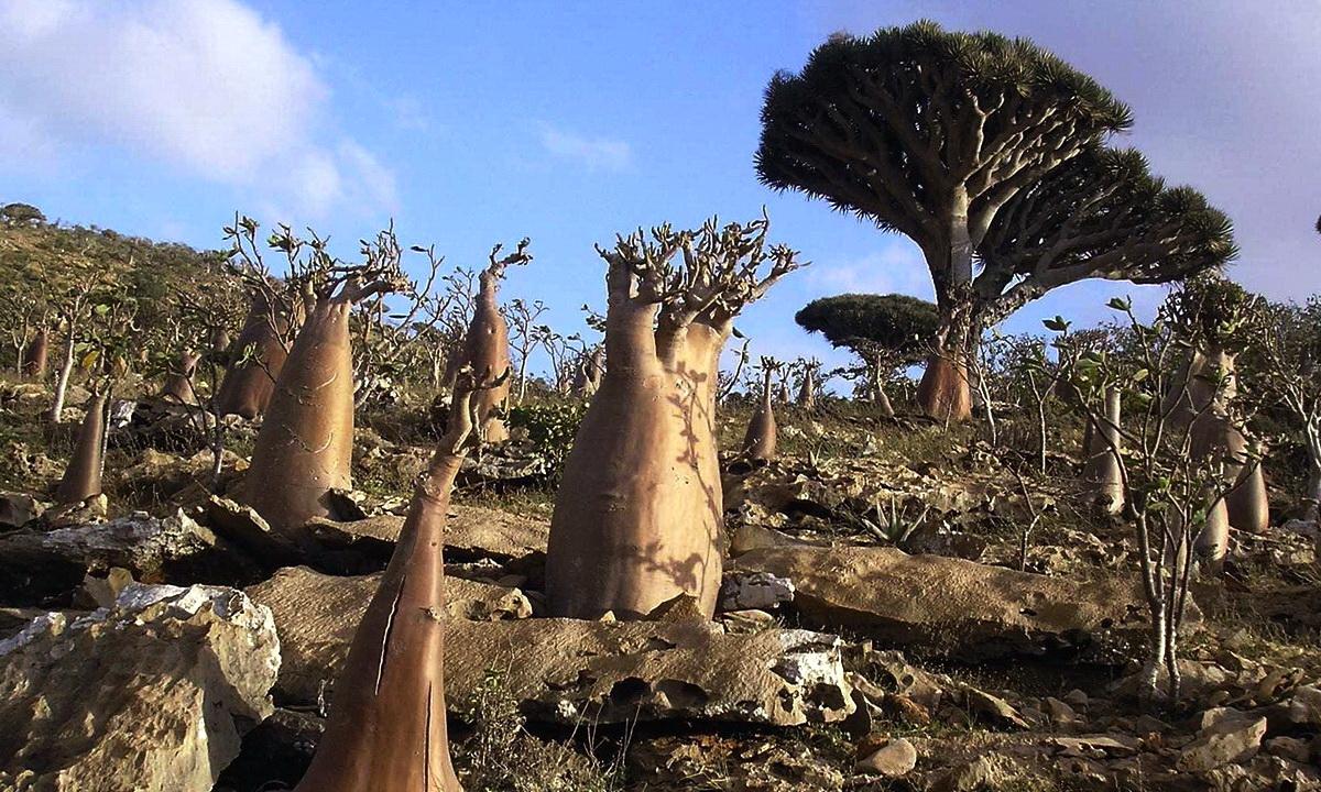 Инопланетный мир острова Сокотра