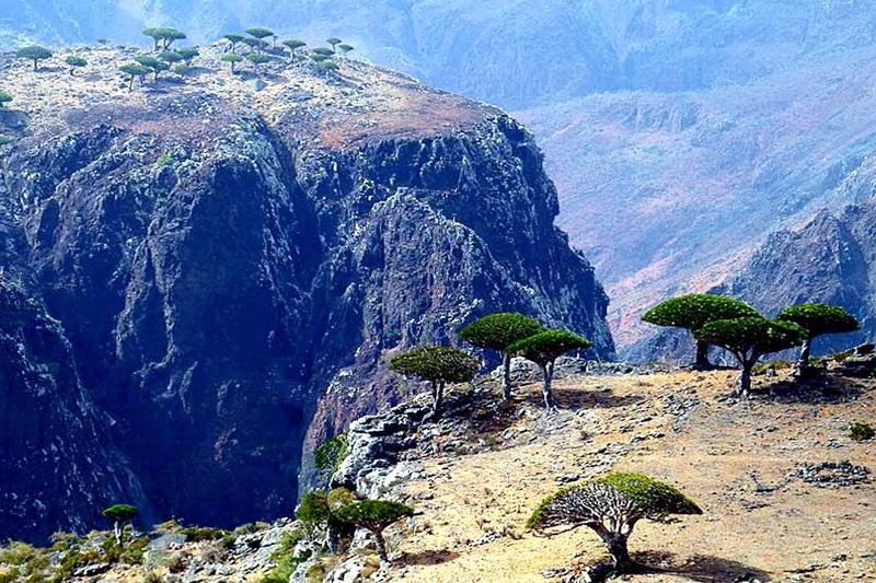Природа острова Сокотра