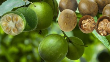 Свойства фрукта Будды архата