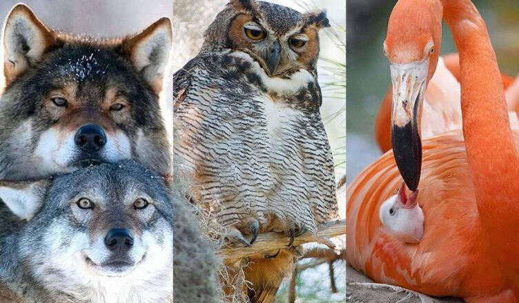 Лучшие отцы животного мира