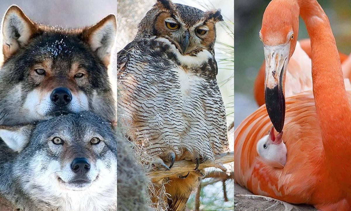 12 лучших отцов животного мира