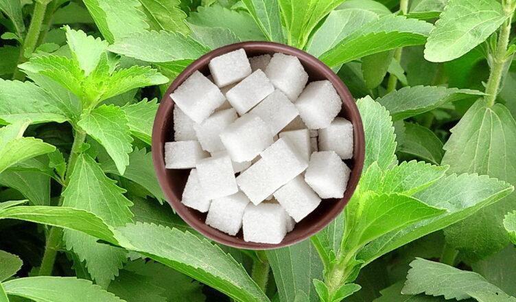 Натуральные заменители сахара на грядке