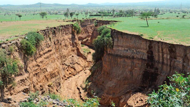 Распространение окаменелостей и теория тектоники плит