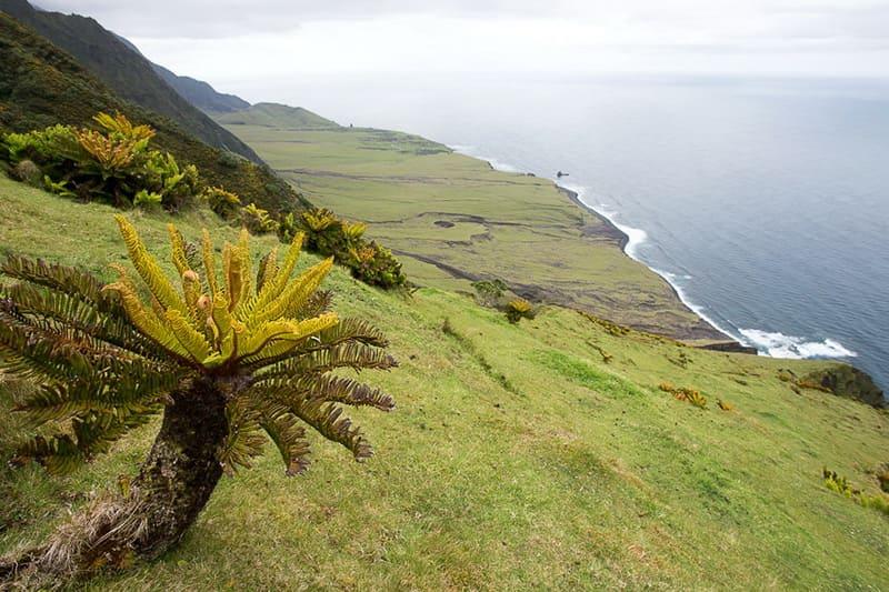 Растительный мир Тристан-да-Кунья