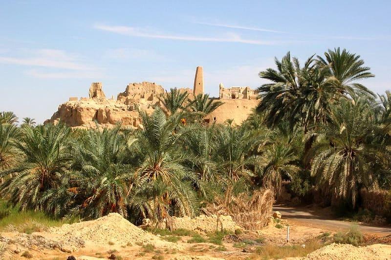 Оазис в большой пустыне