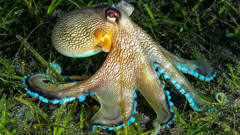 10 самых необычных осьминогов