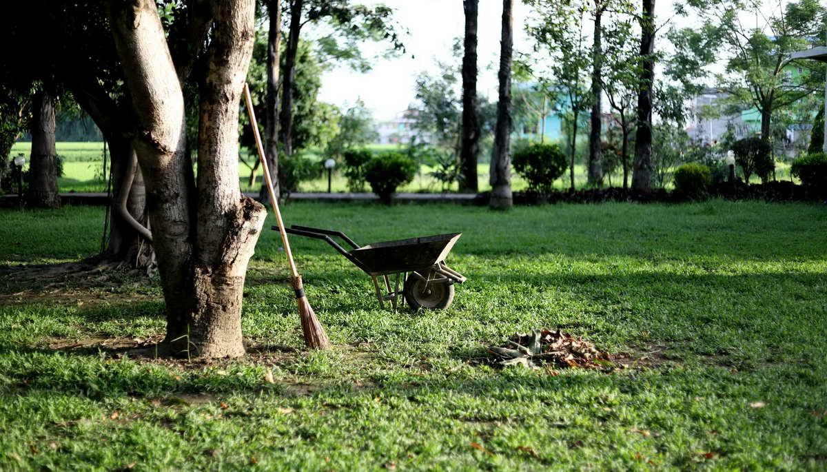 Какие работы следует проводить в саду в ноябре