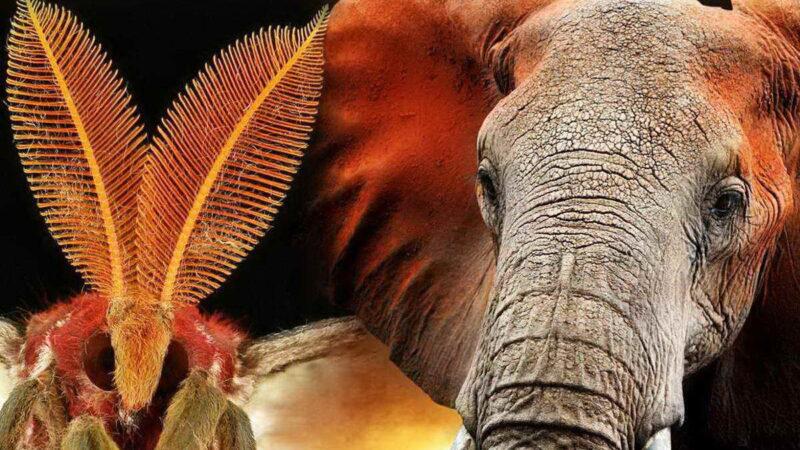 Животные с самым сильным нюхом — чемпионы по обонянию