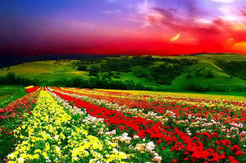 Долина цветов Индия