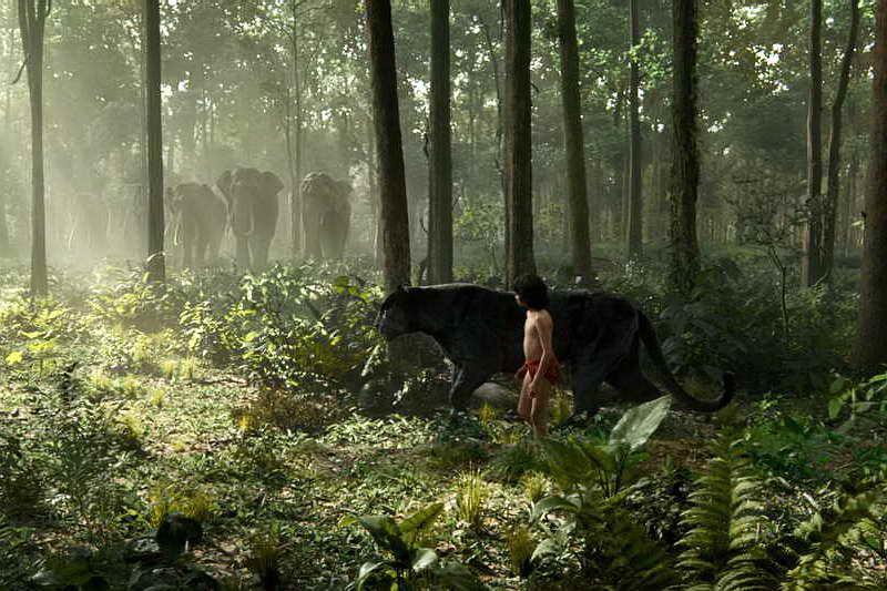 Сцена из фильма Книга джунглей