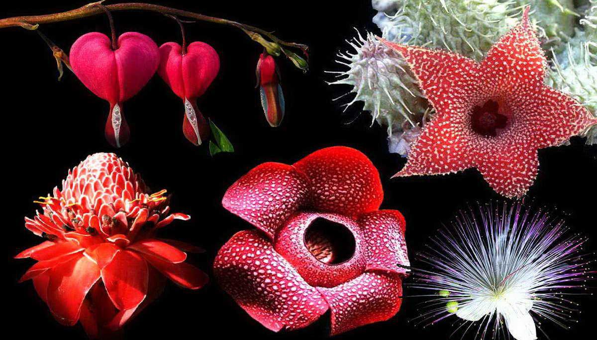 12 самых необычных очаровательных цветов