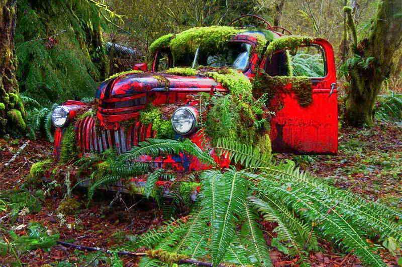Автомобиль в лесу