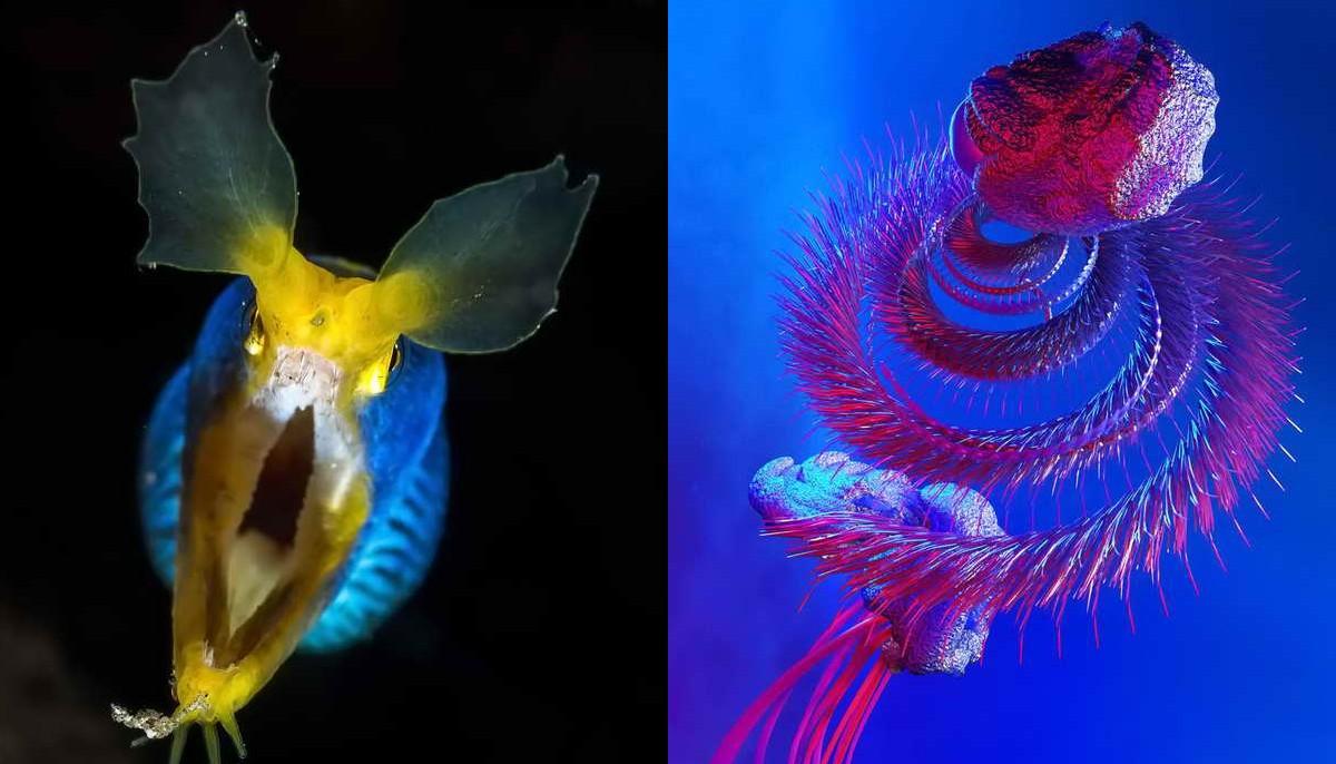 12 необычных живых существ подводного мира