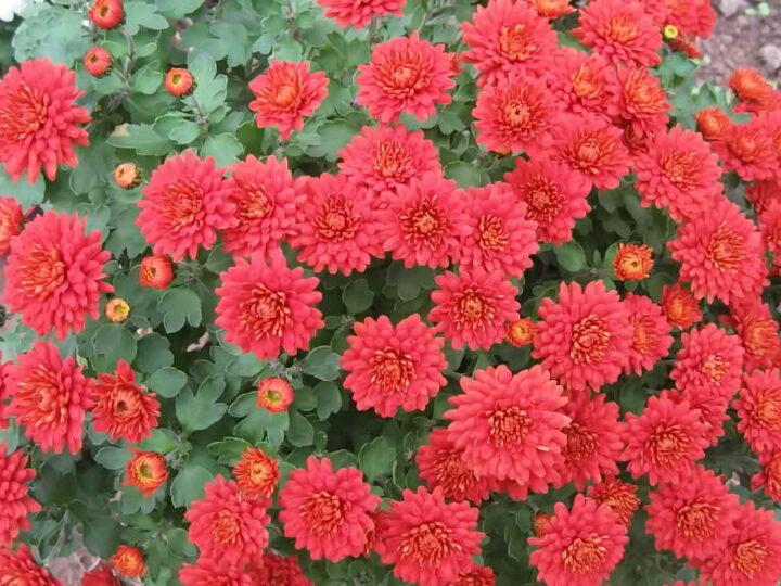 Забота цветовода осенью в саду и дома